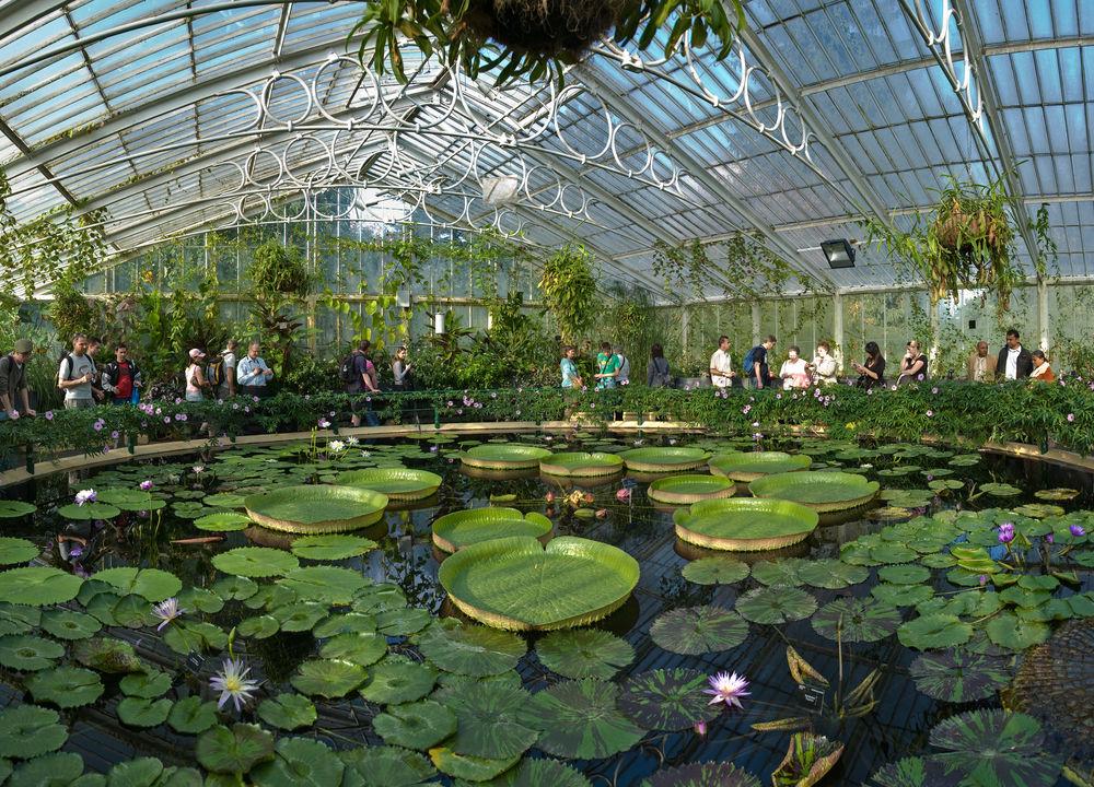 I Waterlily House finns färggranna näckrosor och andra exotiska växter.