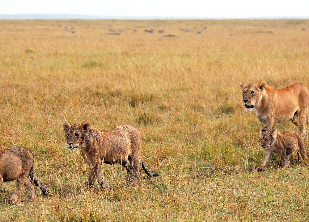 På dyrebarnehjemmet i Nairobi får elefantene mat fra store tåteflasker