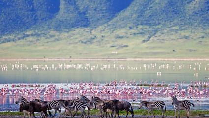 Ngorongorokratern - även kallad Edens lustgård - med sin mångfald av djur