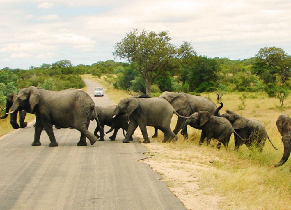 Overgangssted i Krugerparken.