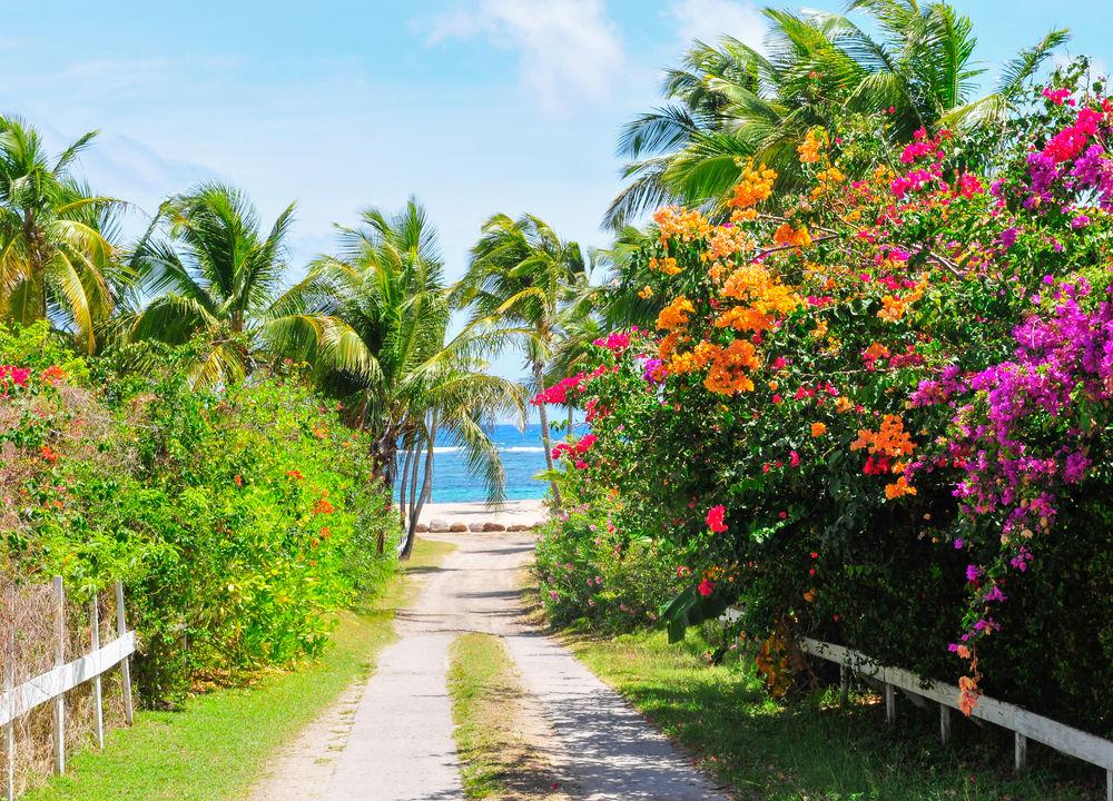 Vid Nevis kastar vi ankar utanför huvudstaden Charleston, vars 1500 invånare bor i träkåkar i glada pastellfärger. Nevis är nog Karibiens vackraste botaniska trädgård med en bedövande blomsterprakt.