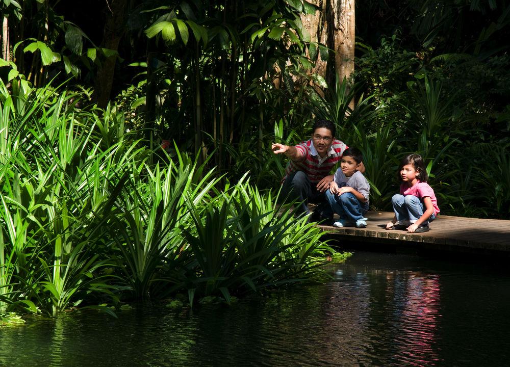 Inredning djungel i storstan 3