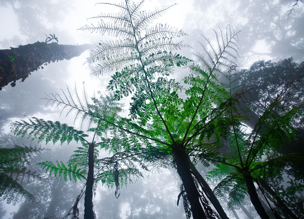 Skogen rundt Kinabalufjellet