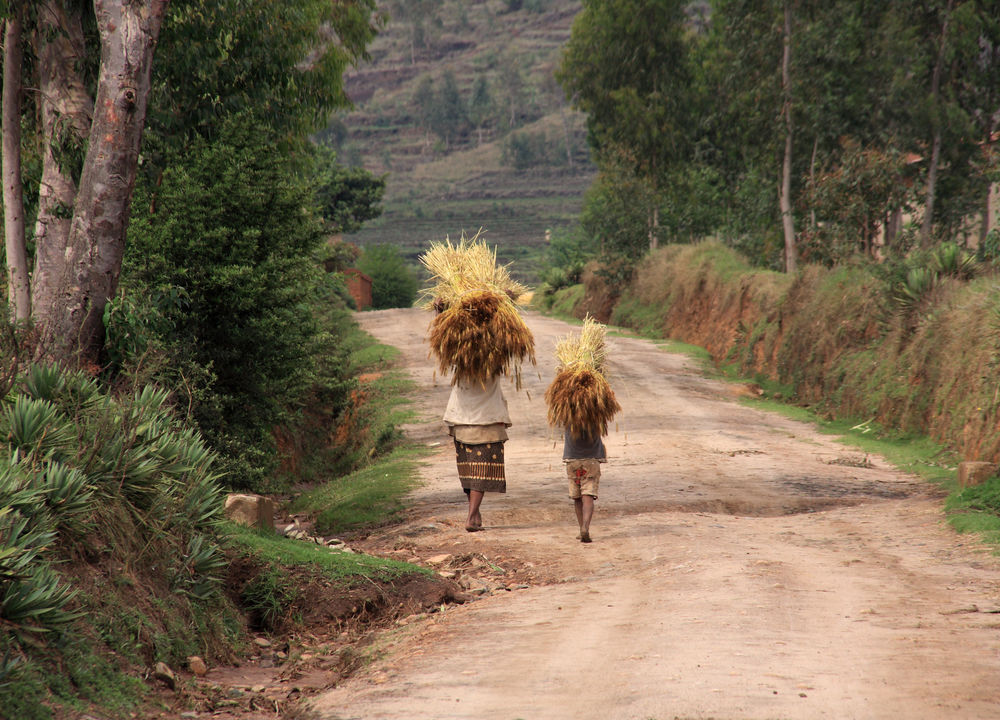 Resan går genom Madagskars landsbygd.