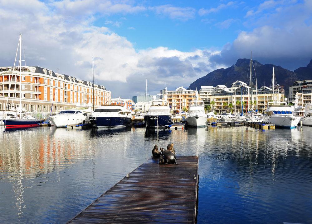 Solande sälar i Kapstaden.