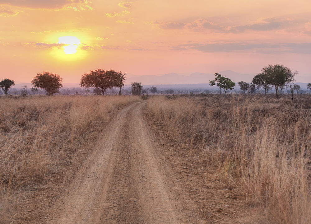 Solnedgång i Mikumi nationalpark, Tanzania.