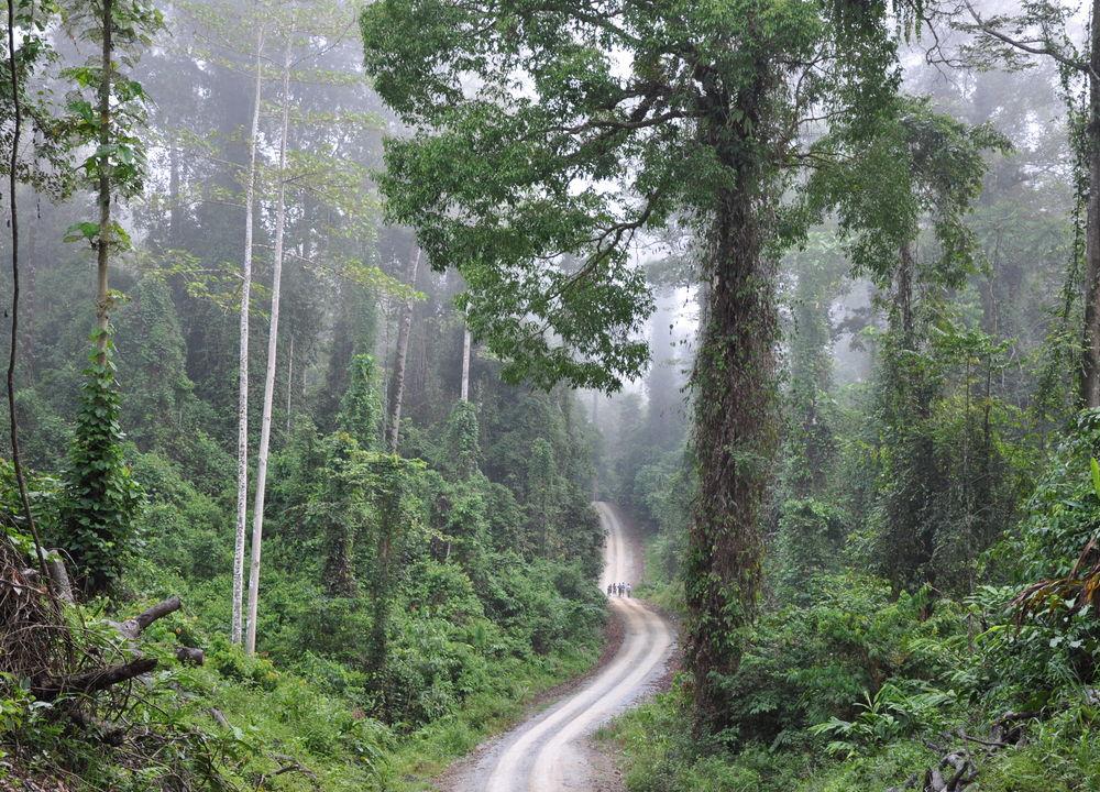 Regnskog i Danumdalen