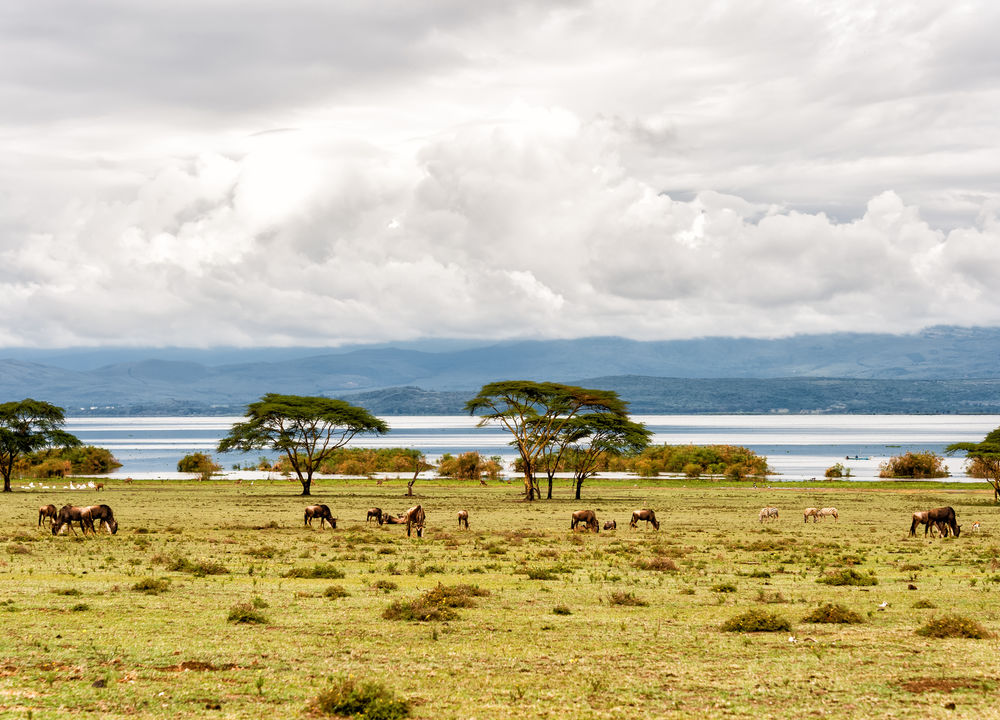 Naivashasjön i Kenya