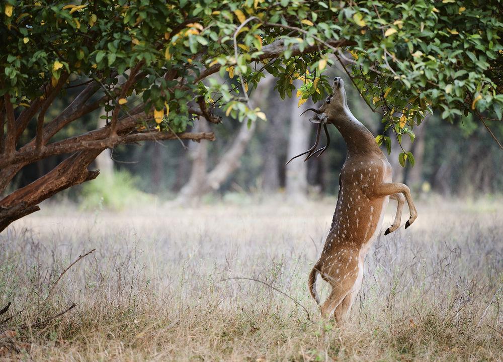 Ranthambores djurliv