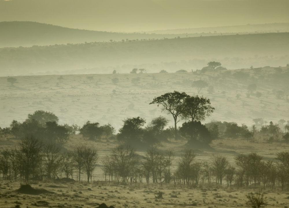 Soluppgång över Serengeti.