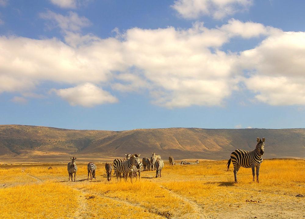 Nere på kraterbotten, Ngorongoro.