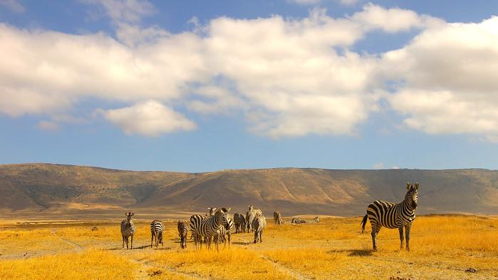 Nede på kraterbunnen, Ngorongoro.