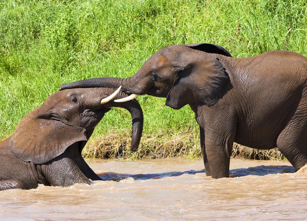 Elefantungar, Tarangire.
