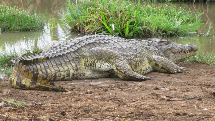 <P>Luangwafloden hyser en mängd krokodiler.</P>