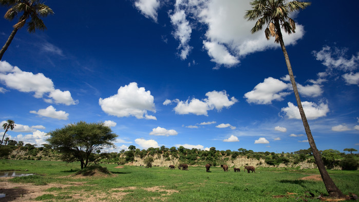 Tarangire nationalpark.