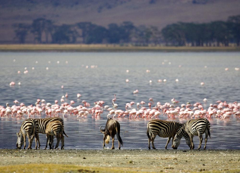 Manyarasjön frekventeras av flamingos.
