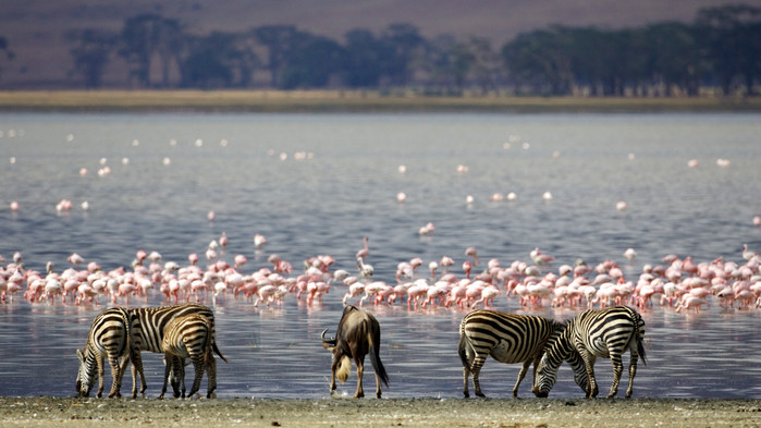 <P>Lake Manyara frekventeres av flamingoer.</P>