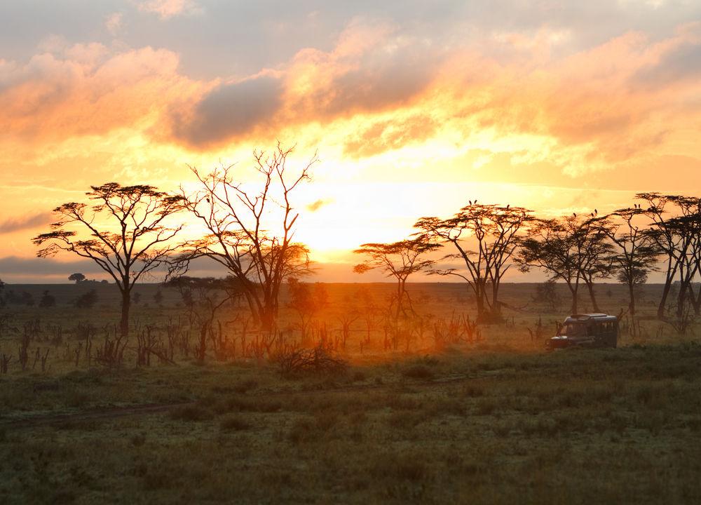 Solnedgång, Serengeti.