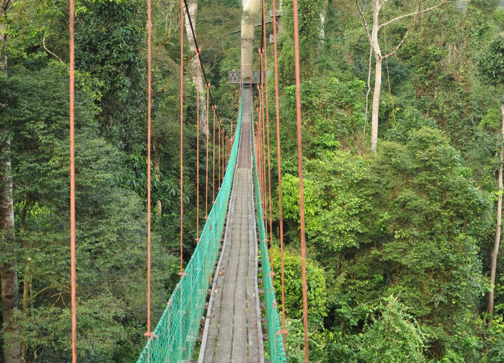 Hengebro i Kinabalu
