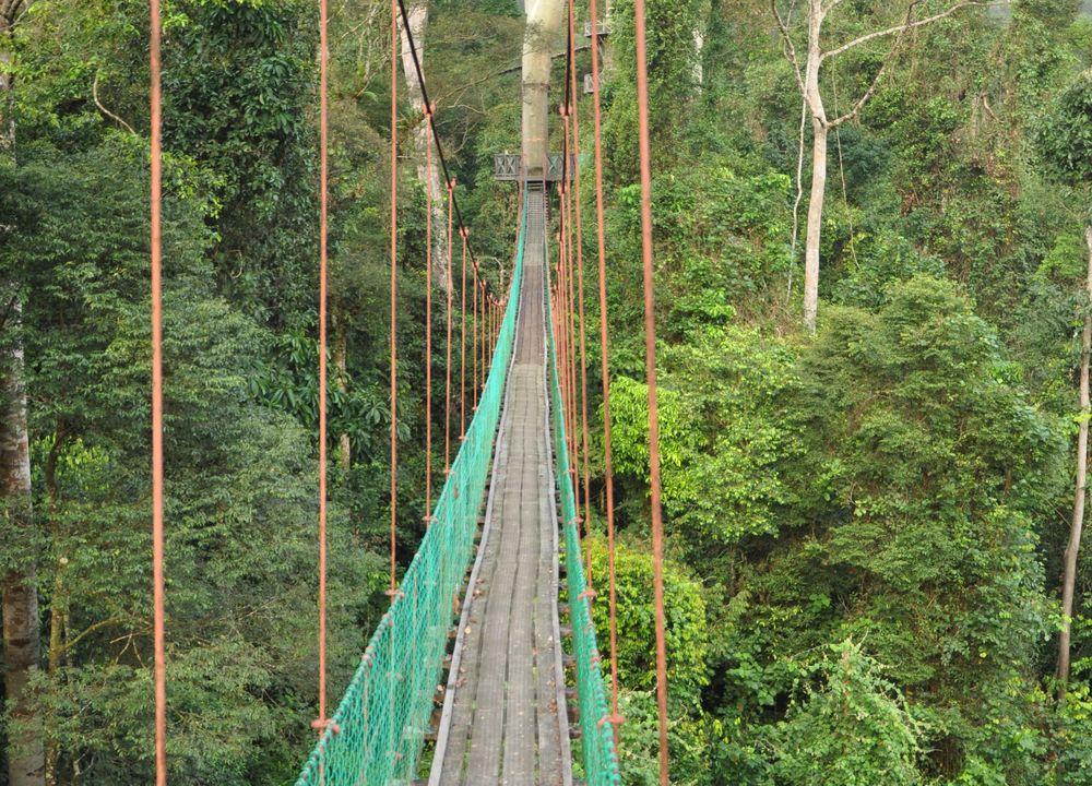 Hängbro i Kinabalu