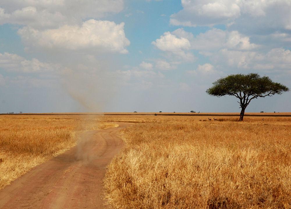 Savanne med støvhvirvel, Serengeti.