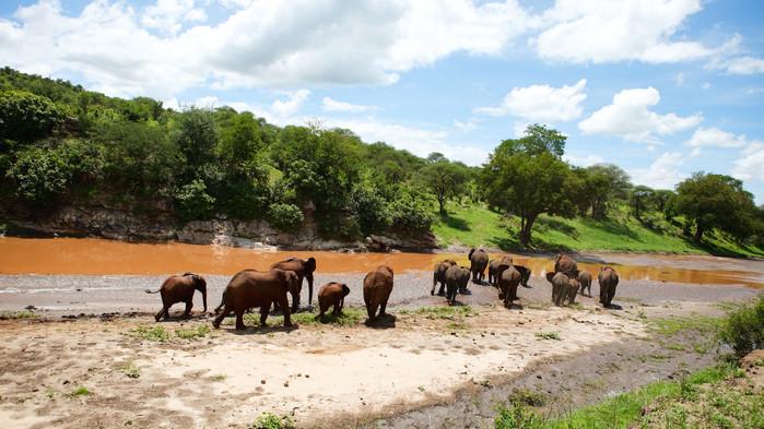 Elefantflokk i vakre Tarangire Nasjonalpark.